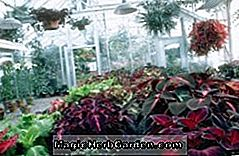 Greenhouse Havearbejde Tips: tips