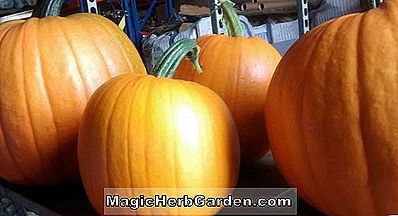 Halloween, Big Giant Squash - Squash Records
