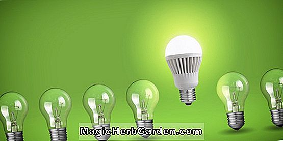 Have Design: Bulb Information