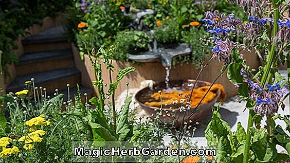 Butterfly & Hummingbird Garden Design til hjemmet haven, Landskabspleje design