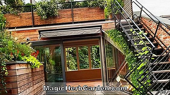 Have Design: Gaining Ground Garden Design - Tough Plants til hårde steder