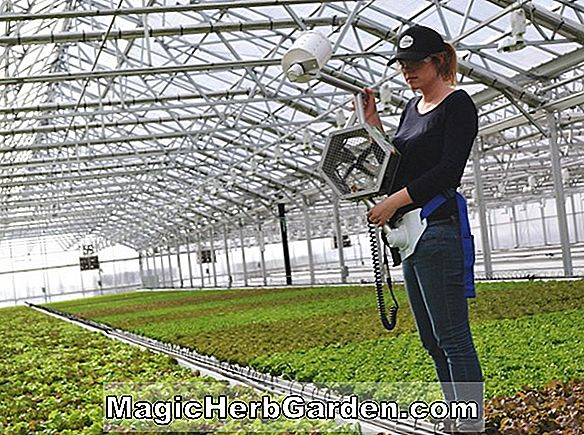 Have Design: Greenhouse Beneficial Insects
