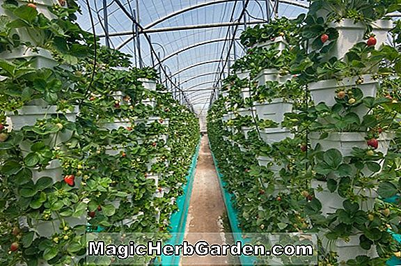 Have Design: Greenhouse Growing Tips