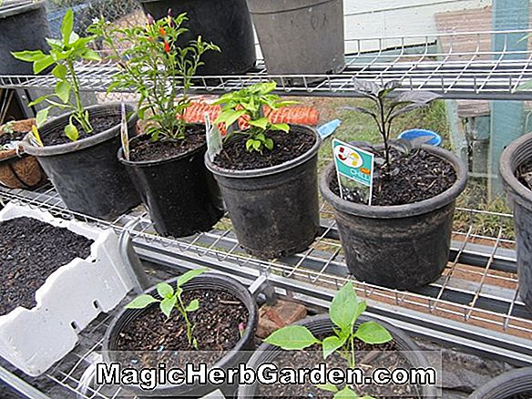 Greenhouse Potting Mix