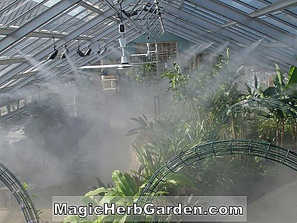 Have Design: Greenhouse Shading