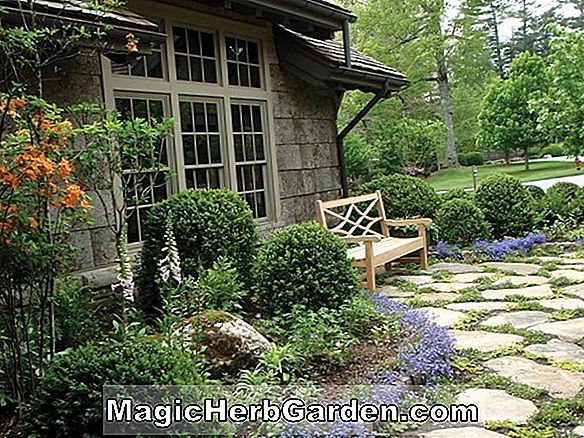 Woodland Border Garden Designs til hjemmet haven, Landscaping design