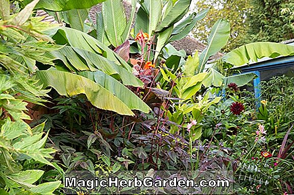 HARDY PLANTS FOR BOLD ELLER SUB-TROPICAL EFFECTS, Havearbejde