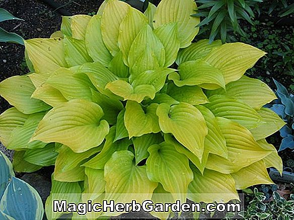 Have Temaer: PERENNIALS ENDURING SEMI-SHADE