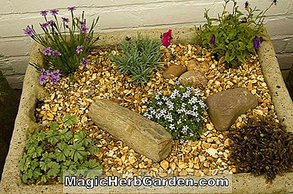 Trough Alpine Gardening