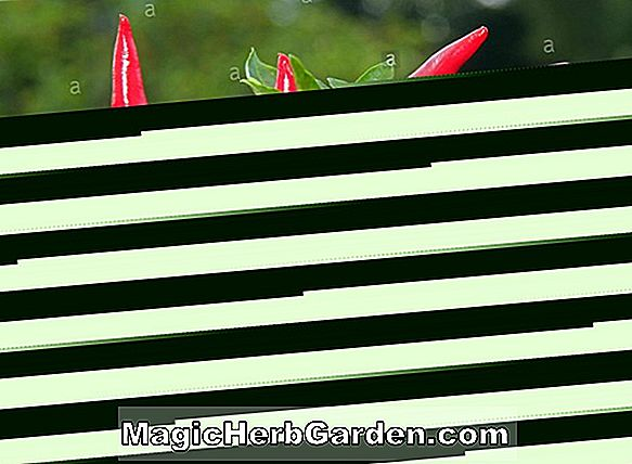 Planter: Capsicum annuum (PC 1 Pepper) - #2