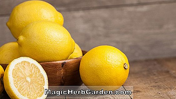 Planter: Citrus limon (Forbedret Meyer Citrus)