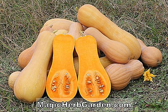 Planter: Cucurbita moschata (Butternut Winter Squash)
