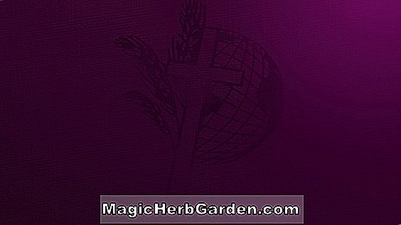 Planter: Fuchsia (Royal Robe Fuchsia) - #2