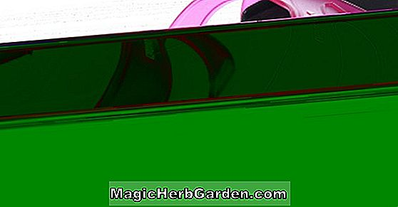 Planter: Fuchsia (Starry Trails Fuchsia) - #2
