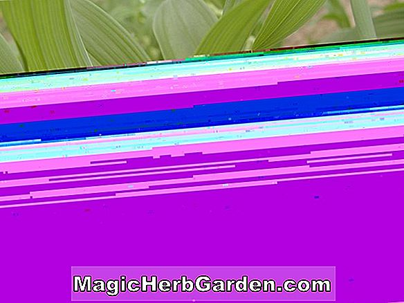 Planter: Hosta (Golden Prayers Hosta)