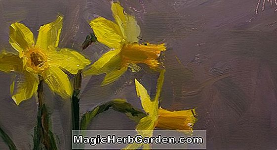 Planter: Narcissus (Sun Disc Narcissus)