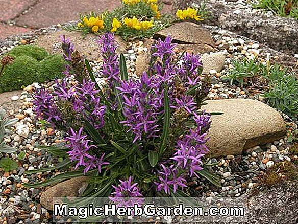 Tips: Alpine Potting Mix