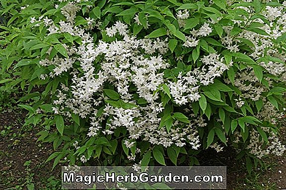 Deutzia Haveplanter Design Information