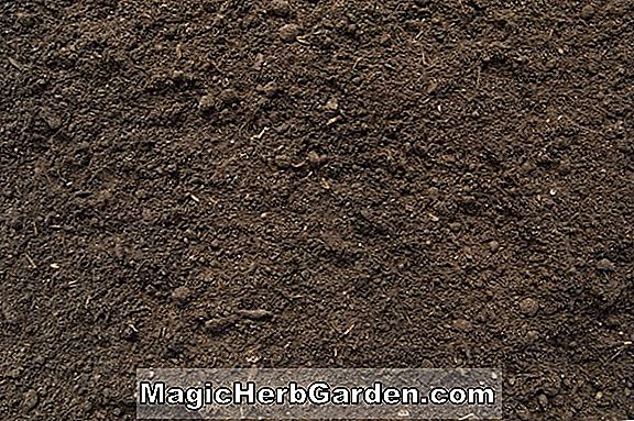 Garden Loam Potting Soil