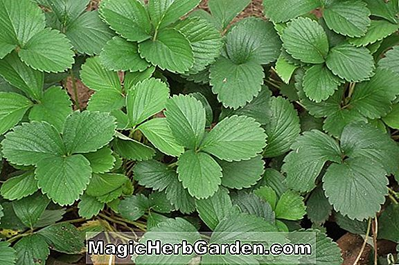 Tips: Ground Cover Plants