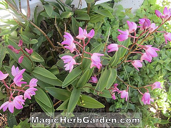 Tips: Orchid Potting Mix