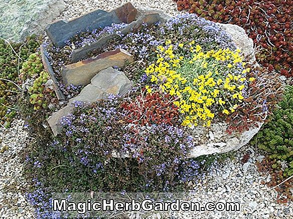 Alpine & Rock Garden Society