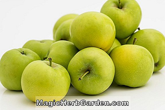 Malus domestica (Green Apple Greening)