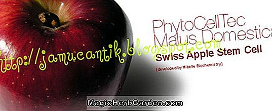 Plantes: Malus domestica (Sir Prize Apple)