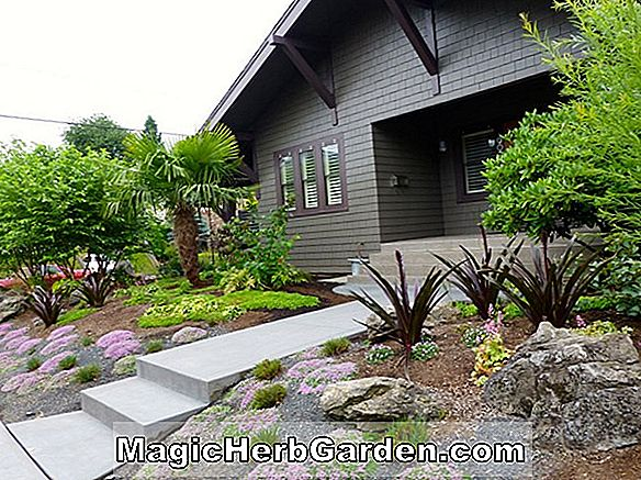 A Pacific Northwest Rock Garden