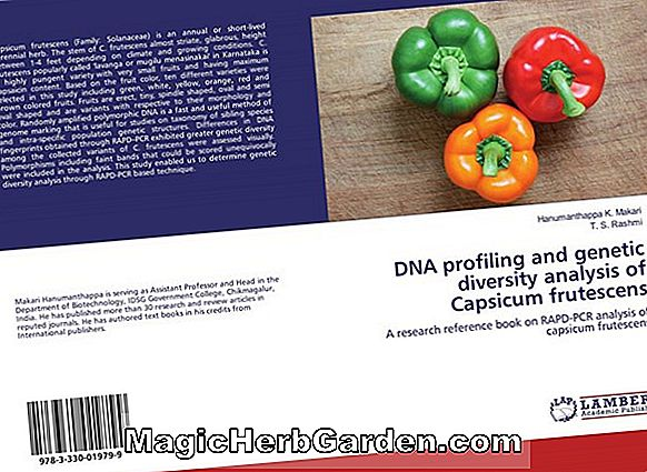 Capsicum annuum (Espanola Improved Capsicum) - #2