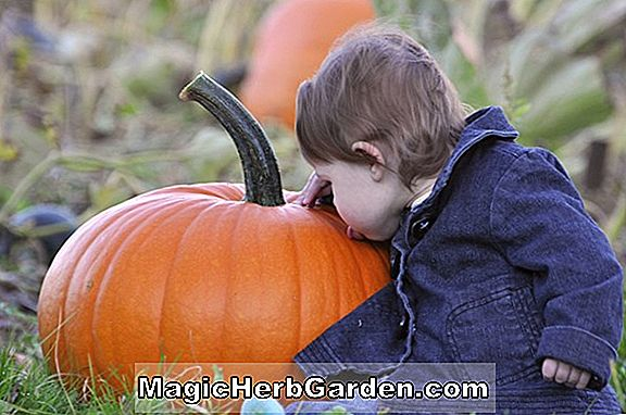 10 Steps to a Giant Pumpkin - oleh Don Langevin