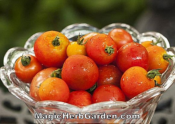 Baked Brandywines - Heirloom Tomato