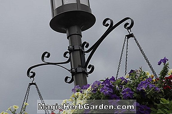 Garden, Lamppost Full-Circle Plan