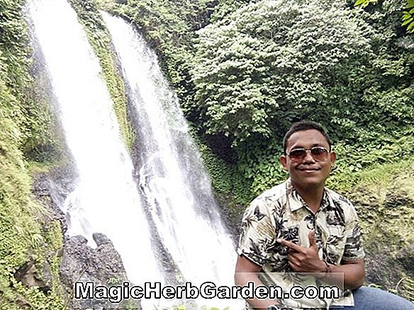 Menciptakan Air Terjun dan Streaming