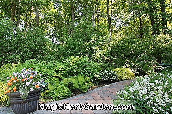 Deutzia Garden Plants Design Information