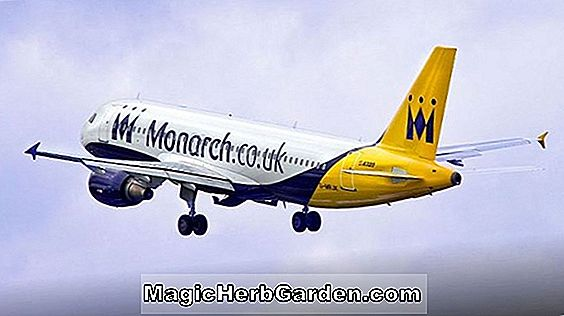 MONARCH OF THE SKY