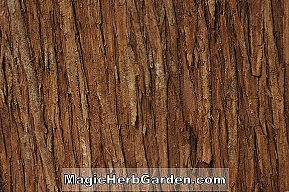 Winter Ornamentals - Bark